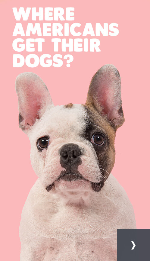 Where Americans get their dogs?